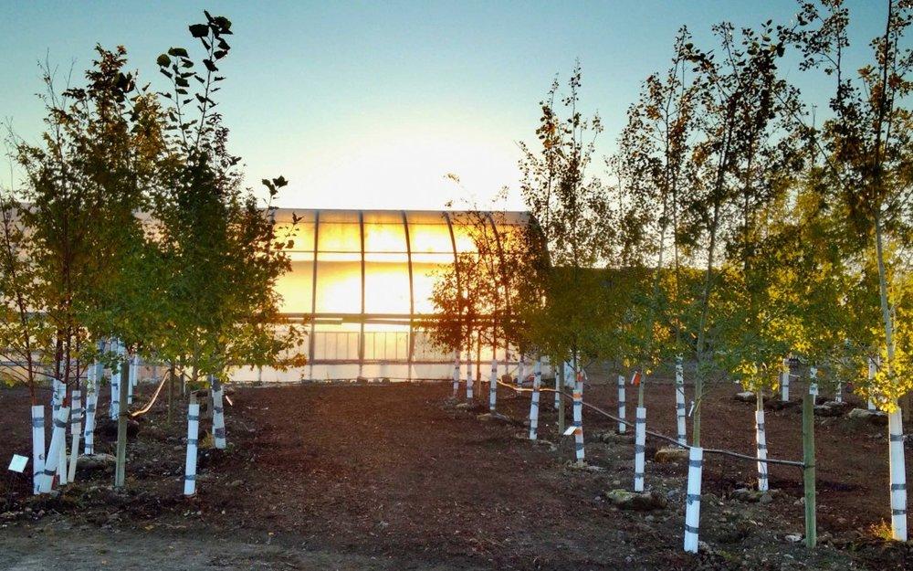 nursery-trees180-1080x675.jpg