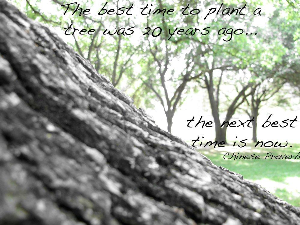 tree-proverbtext.jpg