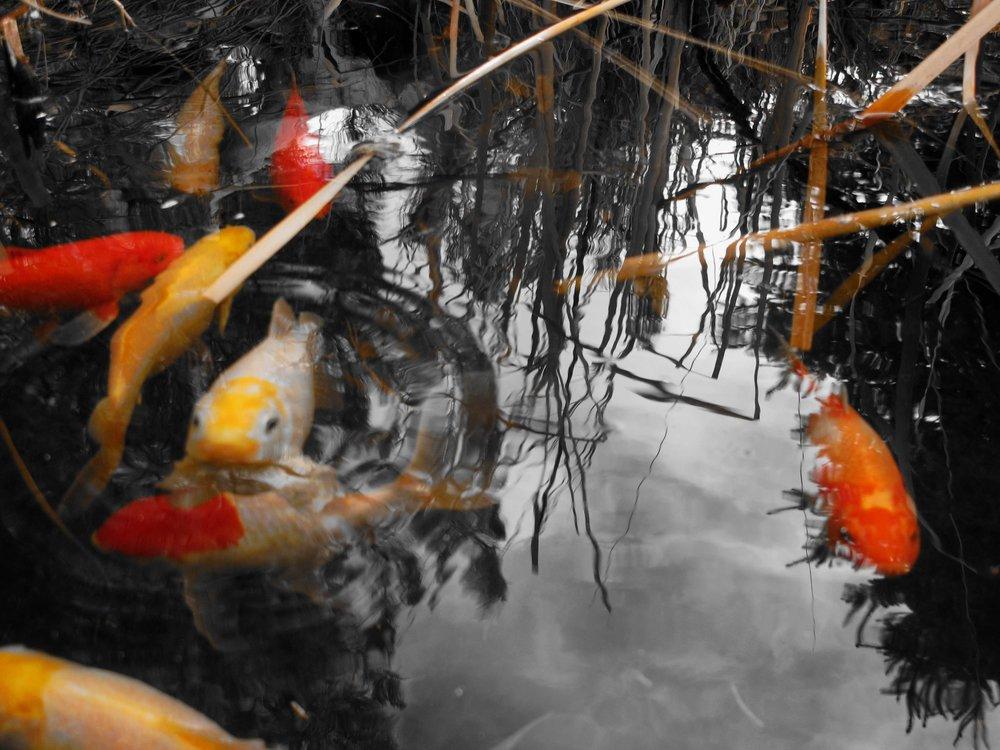 fish2180.jpg