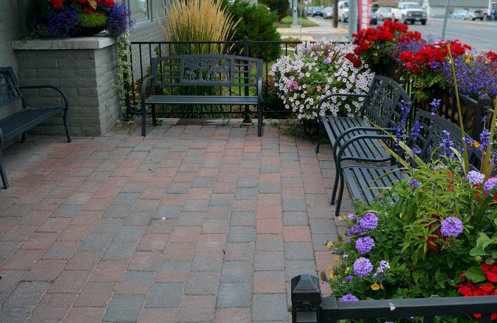 Steve's-patio-flower.jpg
