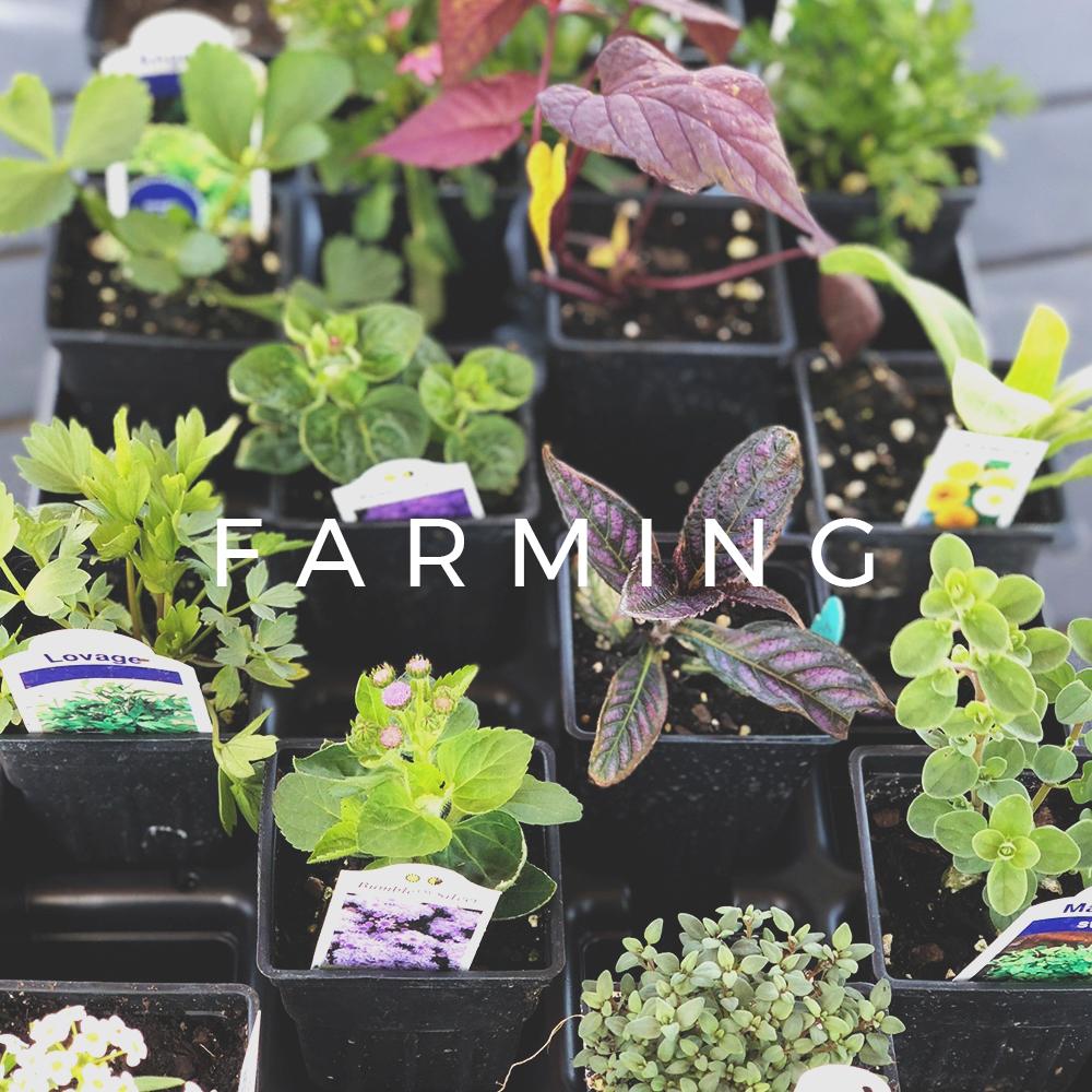 Main-Buttons-Weddings-Farming.jpg