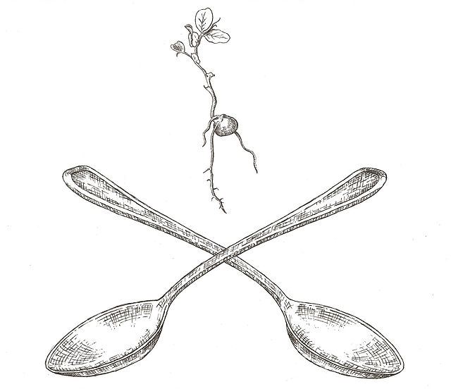 seedsproutspoon.jpg