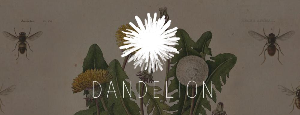 Dandelion Popup
