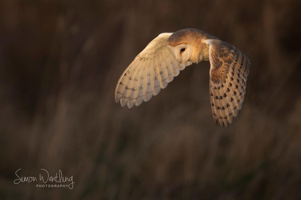 Barn Owl late light - Front Cover.jpg