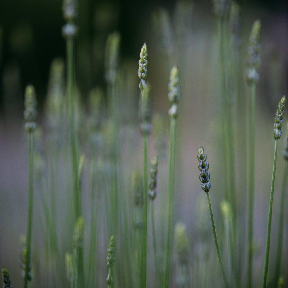 Simplicity -