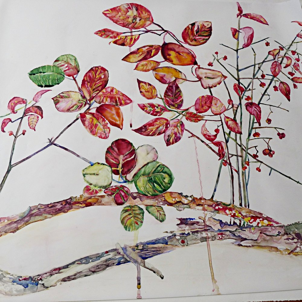 Red Leaves and Twigs