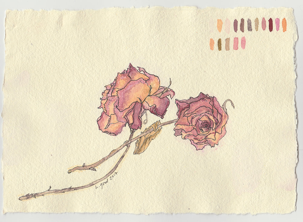 """Dried Roses watercolour and pen on paper 6x8"""" $45"""