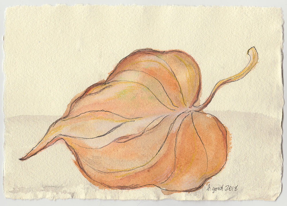 """Dry Leaf watercolour and pen on paper 6x8"""" $45"""