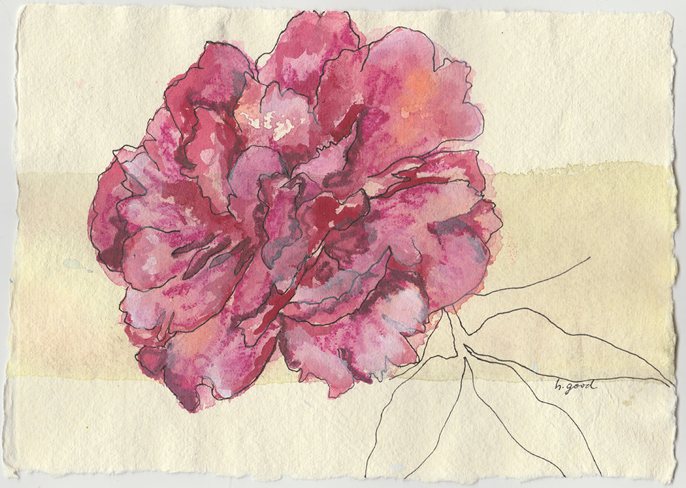 "Pink Peony watercolour and pen on paper 6x8"" $45"
