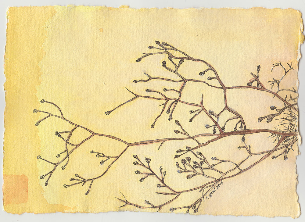 """Winter Branch watercolour and pen on paper 6x8"""" $45"""