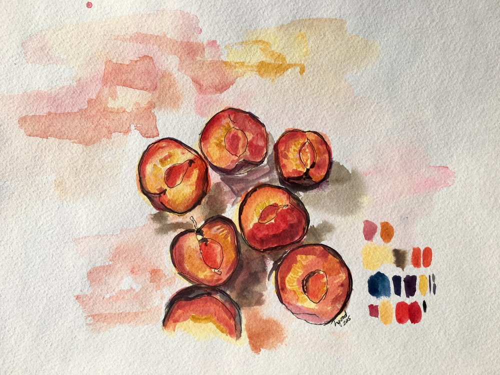 """Plum Halves watercolour and ink on paper 11x15"""" $55"""