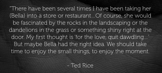ted-quote.jpg