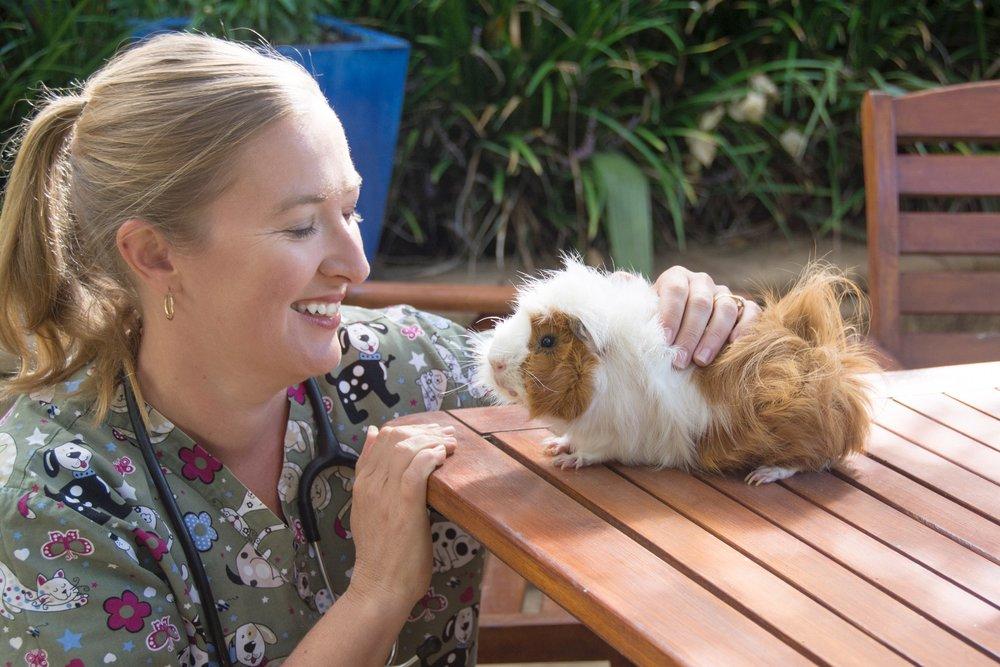 Nicole Baker Vet Home vet home visit Bayside Melbourne