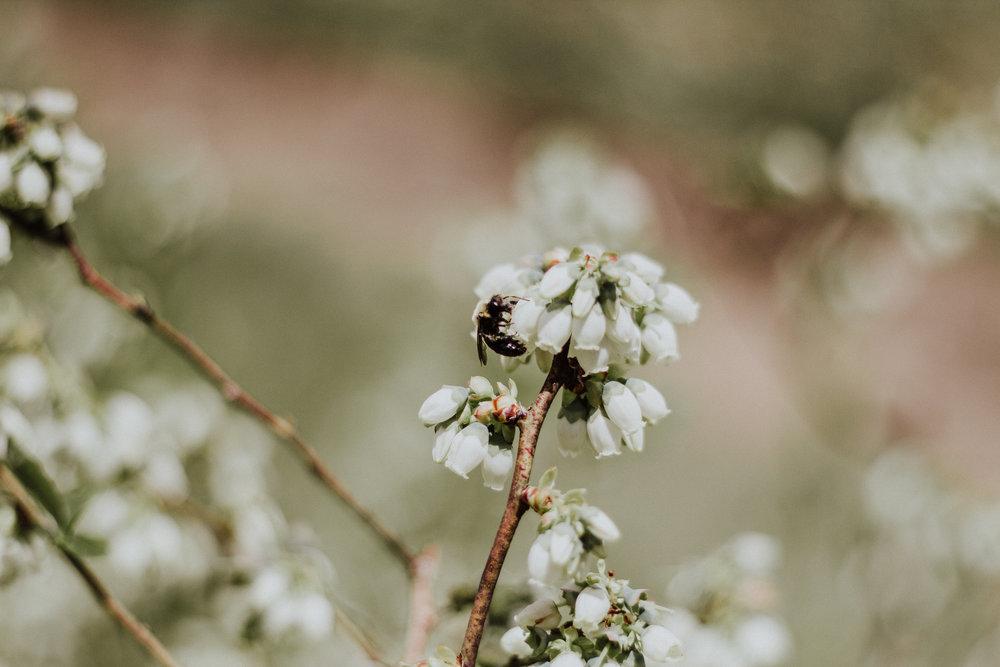spring-berryhill-farm-2018-8775.jpg
