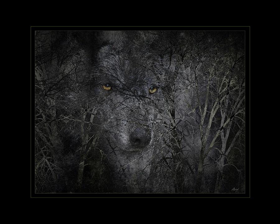 iXrCkmK5Teap8Fe4KRNt_full_cryingwolf-Flashfest2018 example.jpg
