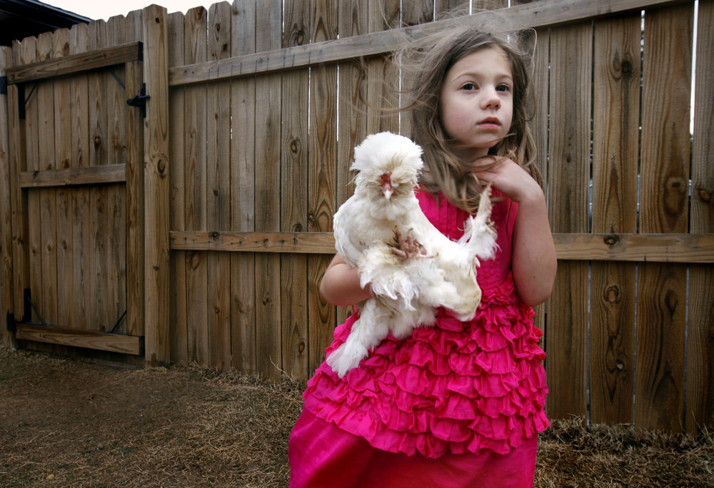 Sera Oakes, 6, holds an ornamental chicken she dubbed Popcorn,  in Nashville, Tenn. The Oakes keep chickens in the backyard of their urban home.