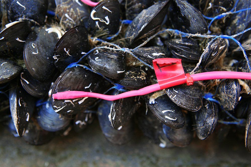 04-The-Living-Mussel-Bio-Sensors-01.jpg