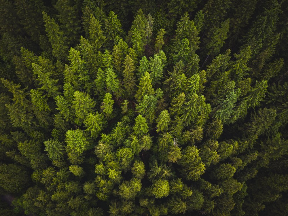 See the Forrest for the Trees -