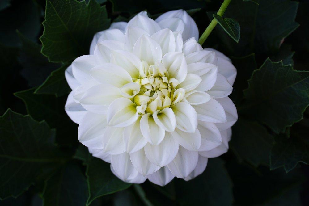 flower-2623315_1920.jpg