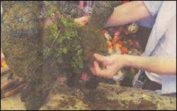 TOPIAIRES_Virginian-Pilot_Shaping-up-a-topiary-cat.jpg