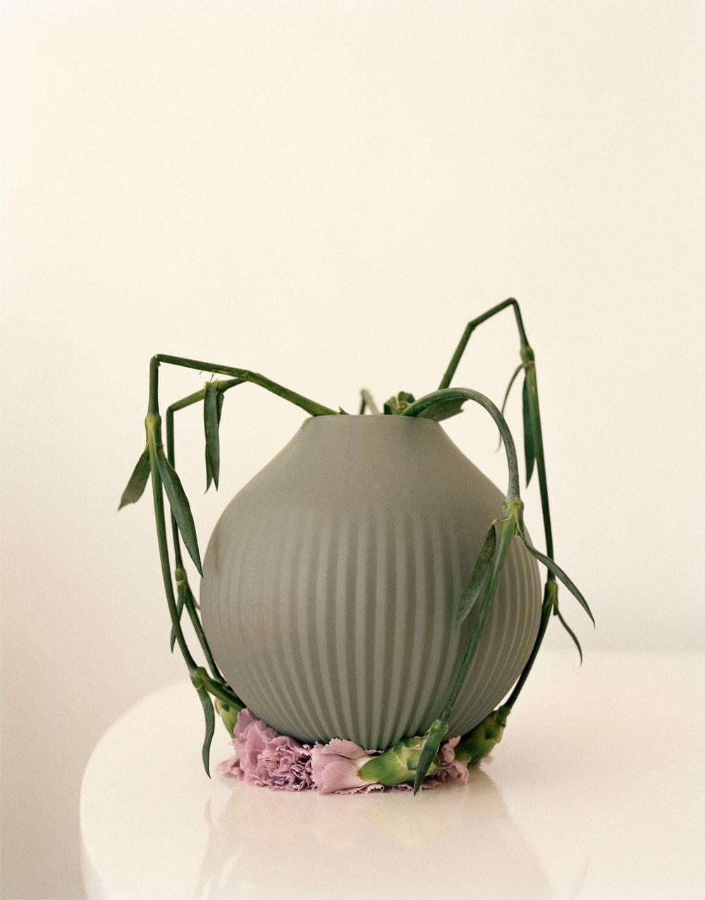 Restricted Flora #4 (C-print) ©Ingrid Eggen