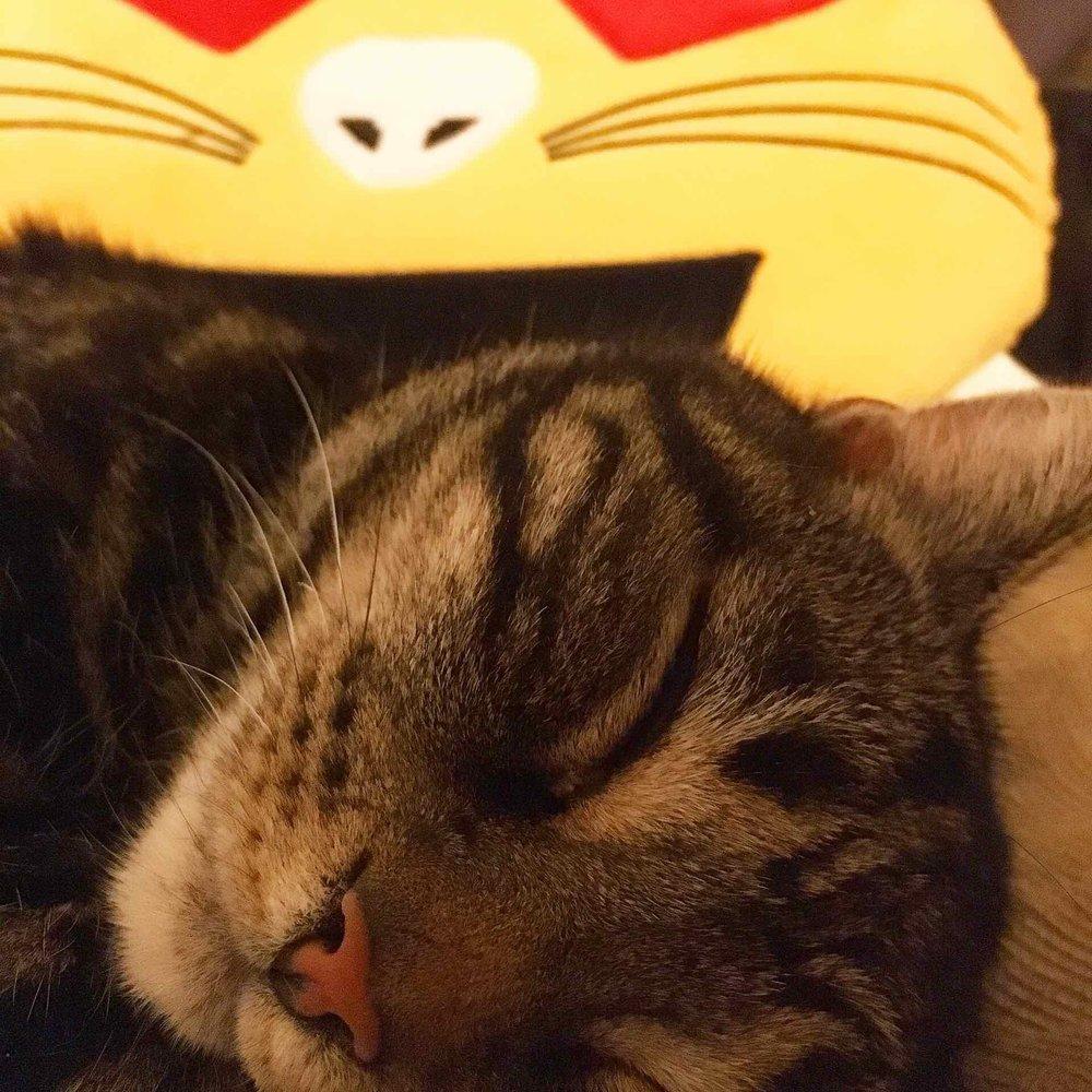 Buster snoozing