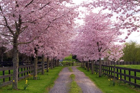 beautiful spring path