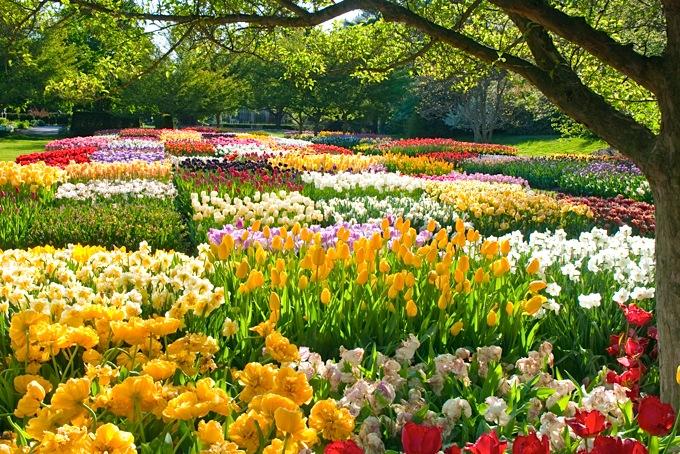 spring-blooms-longwood-gardens-680uw
