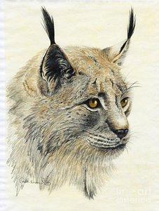 gazing-lynx-phyllis-howard.jpg