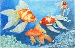 goldfish-tank-phyllis-howard.jpg