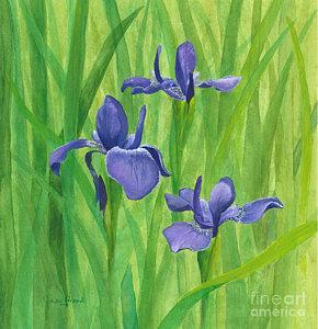 purple-iris-phyllis-howard.jpg