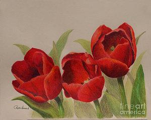 tulip-trio-phyllis-howard.jpg
