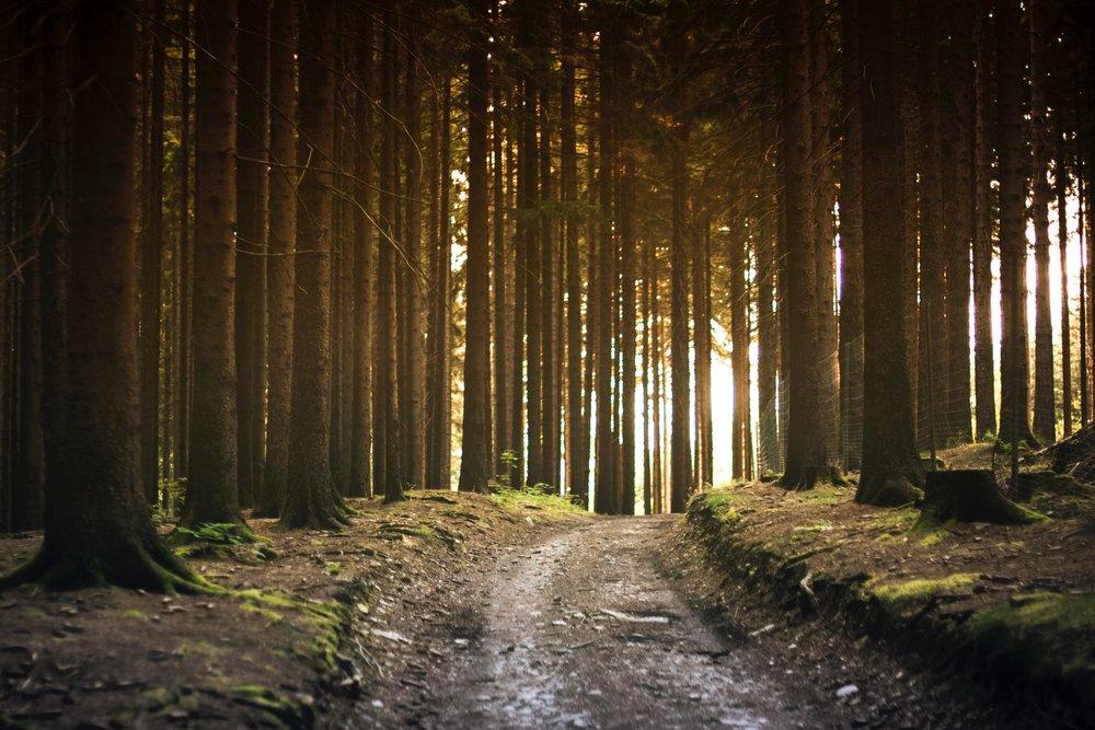 RECURSOS ADICIONALES - Lea más sobre diferentes temas relacionados al litigio de cambio climático.
