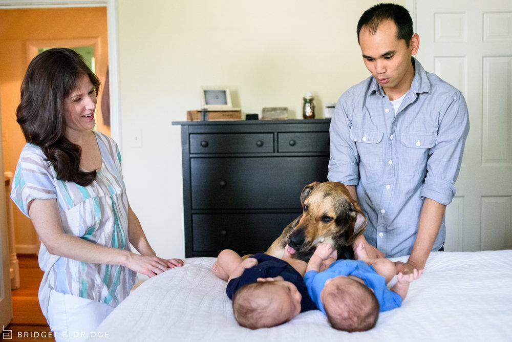 family dog checks on the twins