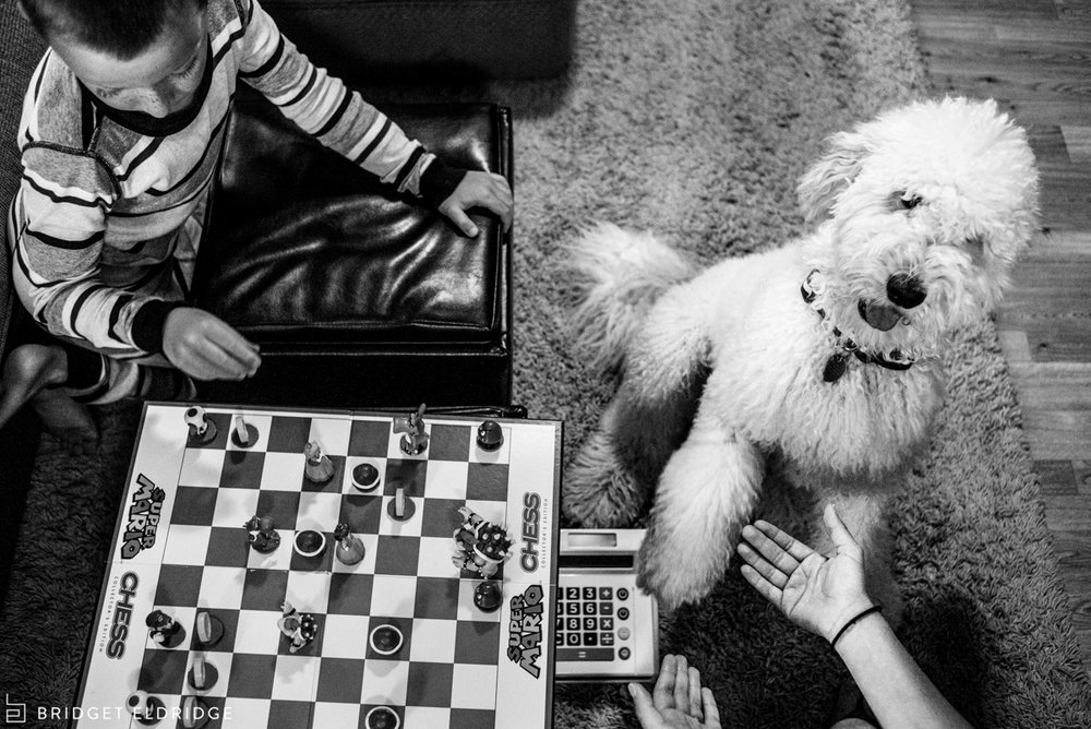 dog shakes hand as family plays super mario chess