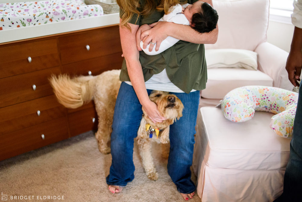 dog demands to be petted as mom holds the new baby