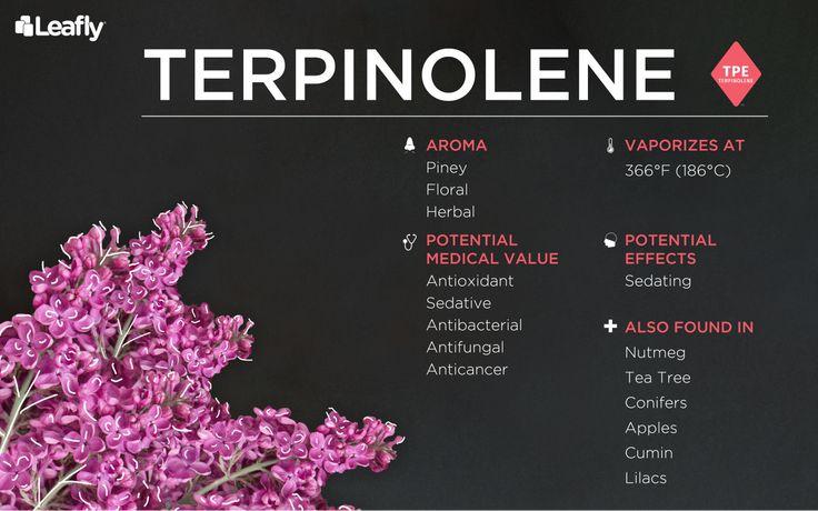 Terpinolene -