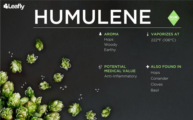 Humulene -
