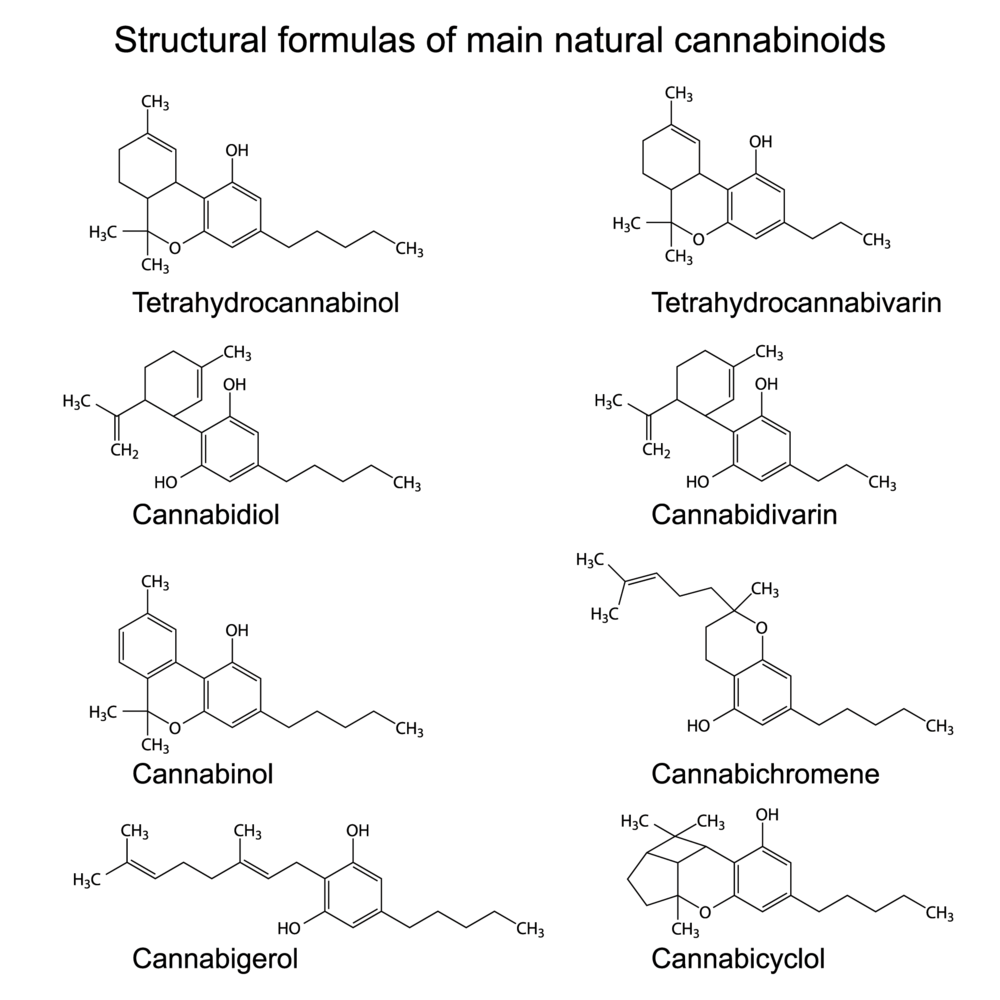 Understanding cannabinoids, and the mechanisms between THC:CBD -
