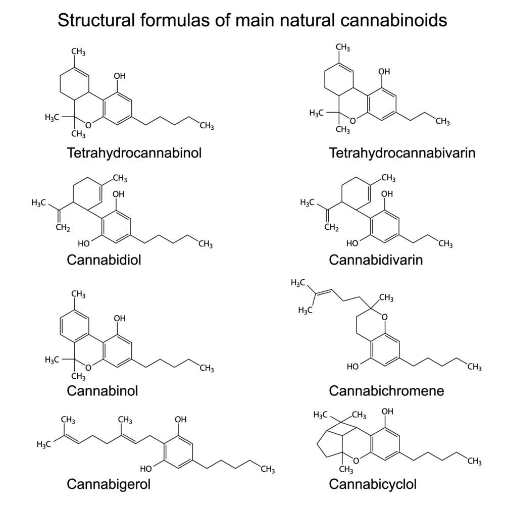 Understanding cannabinoids, and the mechanisms between THC:CBD -