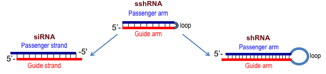 RNAi_comparisons.png