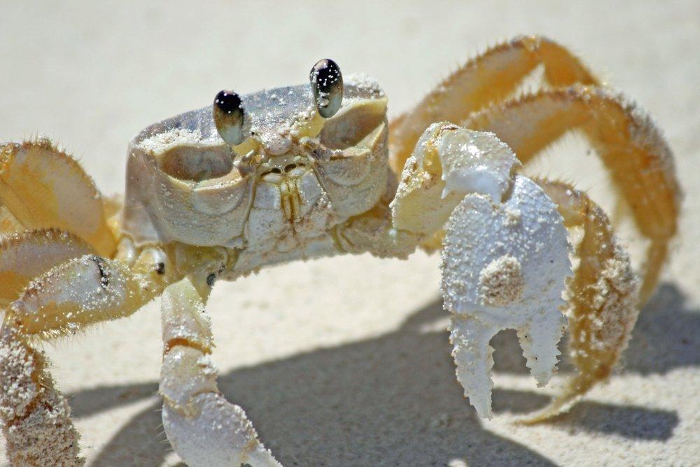crab-2332394_1920.jpg