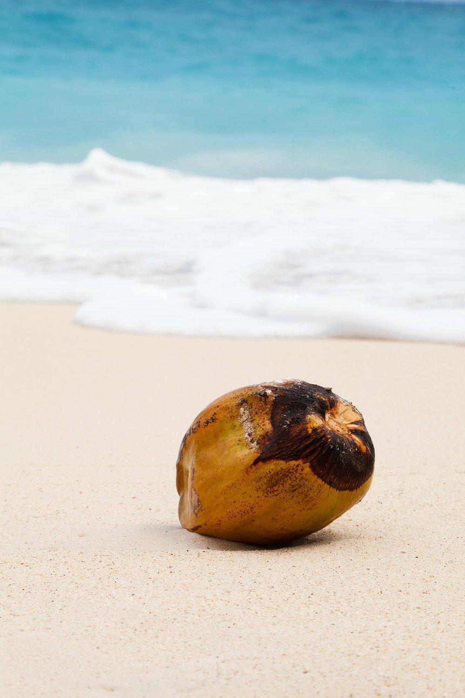 coconut-84539_1920.jpg
