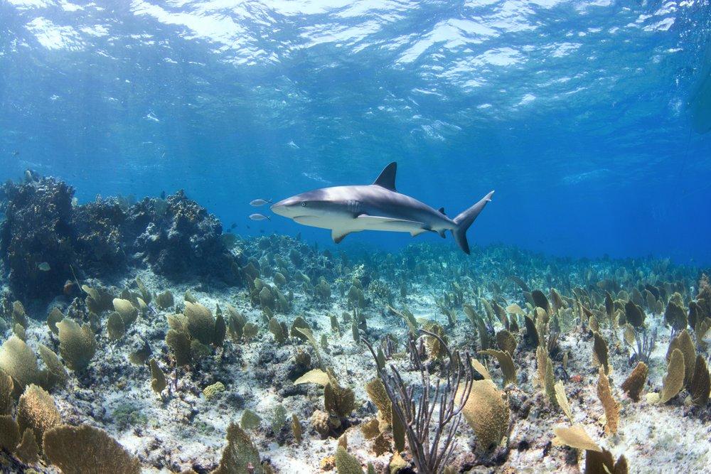 Reef On Reefinsta.jpg