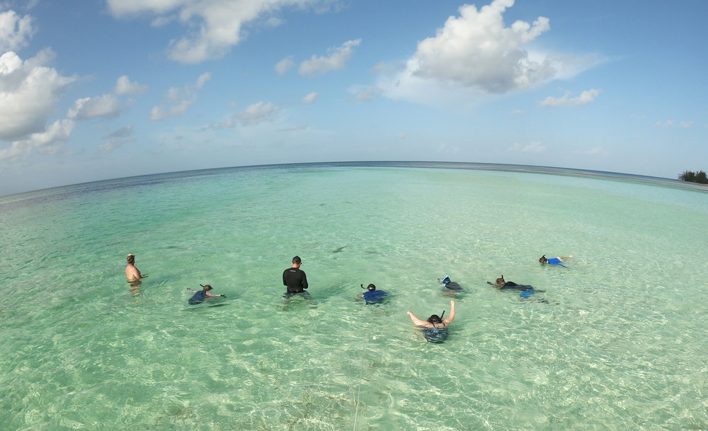 Snorkeling with sub adult lemon sharks