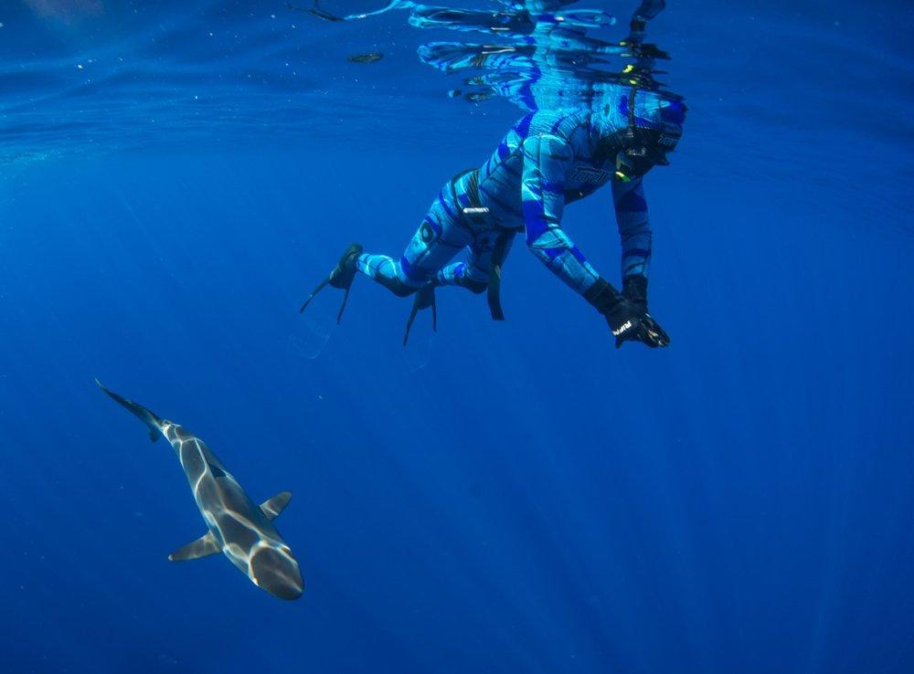 thumbnail_Day 2 - Silky Shark w- Nick.jpg