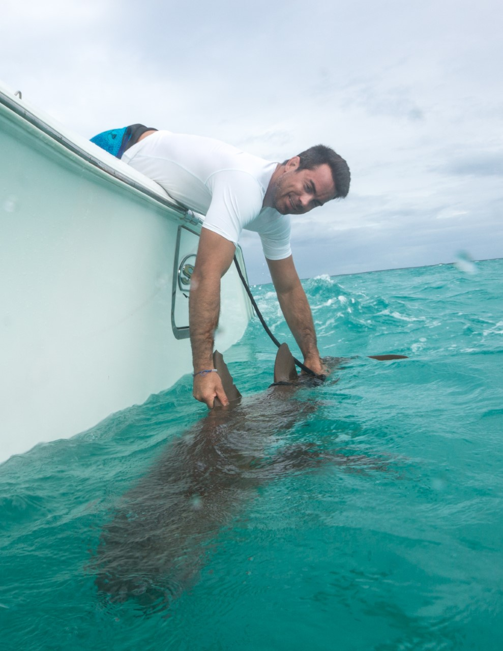 Guest Nick prepares a shark for release