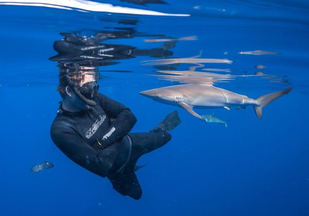 thumbnail_Day 5 - Silky Shark w- Tristan.jpg