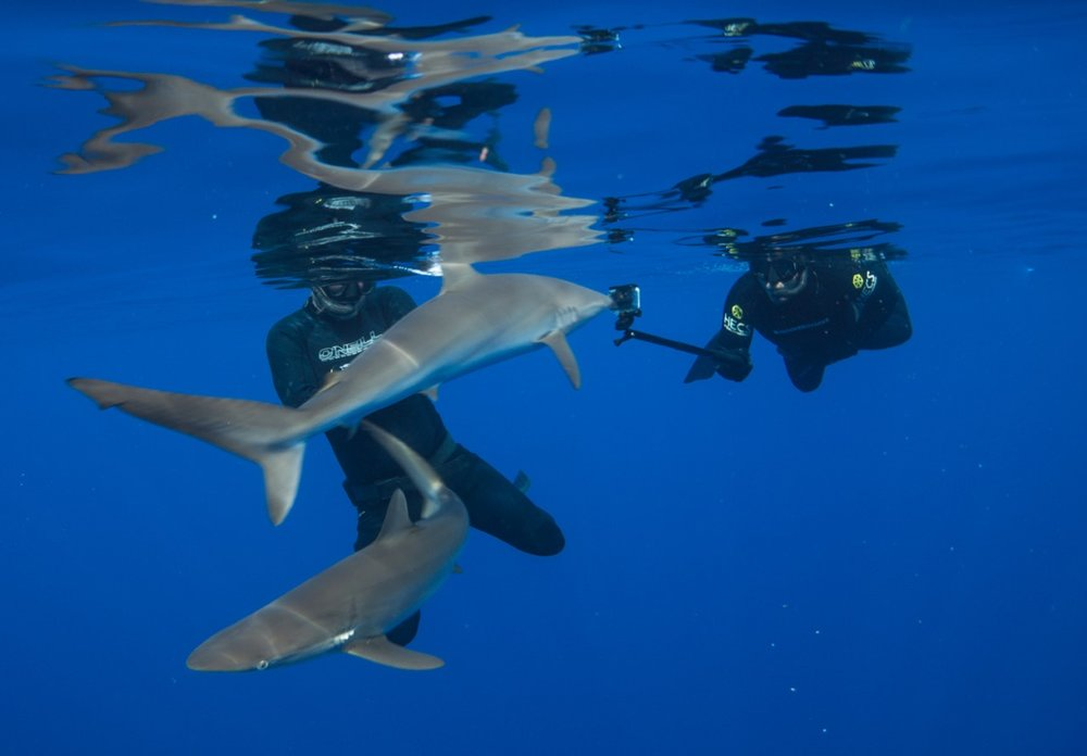 thumbnail_Day 5 - Silky Shark w- Tristan & Jalil.jpg