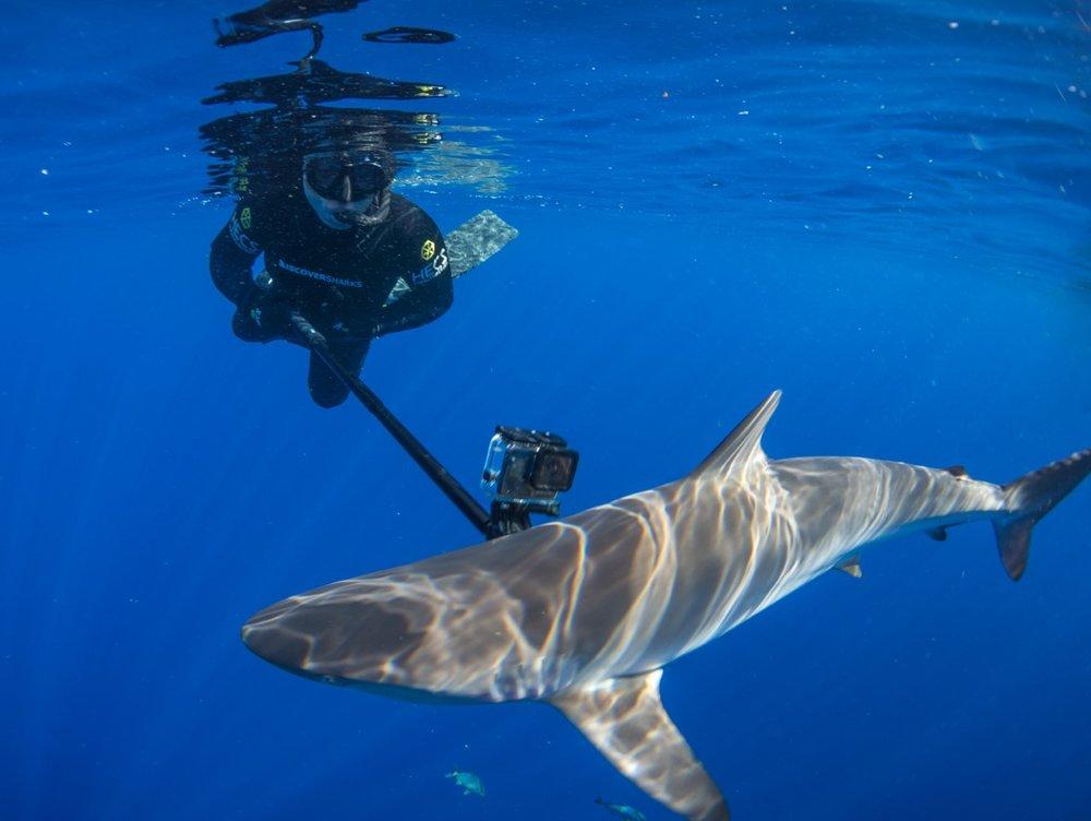 thumbnail_Day 5 - Silky Shark w- Jalil 3.jpg
